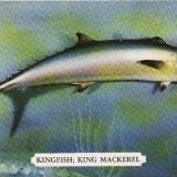 Ilustrata pesti, pescuit - SUA, USA - Carte postala tematica, Necirculata, Printata