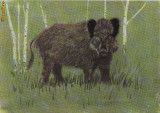 Porc mistret- Ilustrata animale, Necirculata, Printata