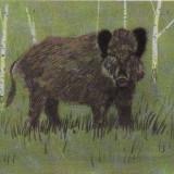 Porc mistret- Ilustrata animale - Carte postala tematica, Necirculata, Printata