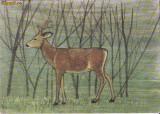 Ilustrata animale- caprioara, Necirculata, Printata