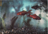 Ilustrata pesti, pescuit- URSS