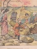 Ziarul Universul : culesul orezului in Japonia (1904,gravura)