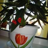 Ghiveci flori