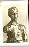 Ilustrata Brancusi -  Portretul lui Darascu