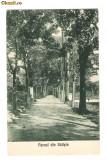 756. Saliste parcul - Sibiu