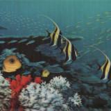 Ilustrata in relief - Pesti-3D - Carte postala tematica, Necirculata, Printata