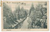 CFL Ilustrata 1906 Valcele Elopatak jud Hargita -  parc