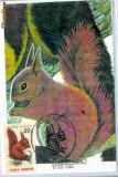 Ilustrata maxima Fauna - Veverita
