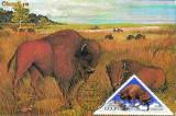 Ilustrata maxima Fauna - Zimbru