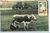 Ilustrata maxima Fauna - vaci
