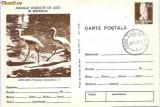 Carti postale Fauna - pasari - lopatari