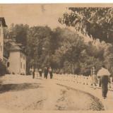 GOVORA-Aleea spre izvoare