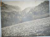 FOTO M.VEVEY-CAMP DE NARCISE LANGA ZURICH,ELVETIA,1900
