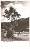 CPI (B130) CHEIA, VALEA TELEAJENULUI, SCRISA SI NECIRCULATA, DATATA 1961