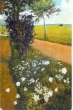 Ilustrata plante medicinale, Pimpinella saxifraga (patrunjel de camp), scoasa de Gehe and Co, Chem. Fabrik, Dreden, Necirculata