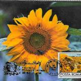 Ilustrata maxima FLORA - Floarea soarelui