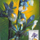 Ilustrata maxima FLORA - Iris hispanica