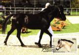 Carte maxima rasa de cai Hutul