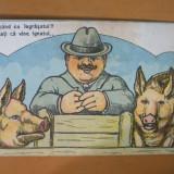 Carte postala caricatura om cu 2 porci