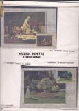 CARTI MAXIME PICTURA DIN MUZEE URSS-expo banatamax ;DR.FARCAS GRIGORE1988-MPSM 49