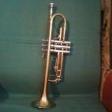 Trompeta Parrot