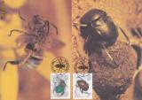 Maxime 3 - Faună - Gândaci SWA, preţ excepţional, Natura, Africa