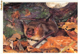 Carte postala ilustrata FAUNA -  Animale salbatice - insectivoare - liliac (myotis bechsteinii)