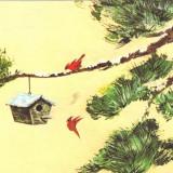 Carte postala ilustrata Fauna - pasarea cardinal (richmondena cardinalis)