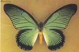 Carte postala ilustrata Fauna - fluturi -  Iterus zamolxis, Gabon