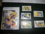 COLITA SI TIMBRE MELCI SOMALIA1999