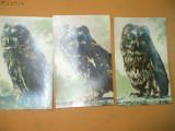 Carti postale animale bufnita in 3 ipostaze 3 buc
