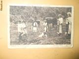 Carte Postala Port popular costum romanesc pastor toiag vite pasune Rumanische Volkstrachen Auf der Weide Berlin