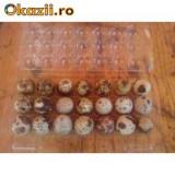 oua  proaspete de prepelita, caserola de 21 oua, de langa bucuresti, livrare zilnica