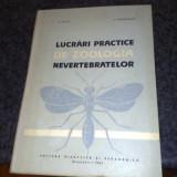 Lucrari practice de zoologia nevertebratelor - curs - Matic / Darabantu - 1965 - Carte de aventura
