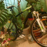 Bicicleta giant revel 4 - Bicicleta Dama