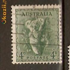 Timbre Australia 1937 Koala