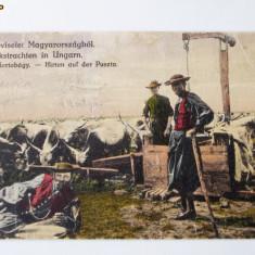 UNGARIA CP VACARI IN PUSTA UNGARA 1922 circulata **