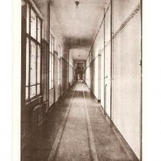 CP190-68,, MARIANUM