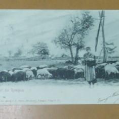 Carte Postala Salutari din Romania Cioban cu oile