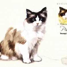Carte maxima pisica Ragdoll