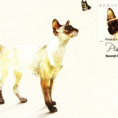 Carte maxima pisica Siameza
