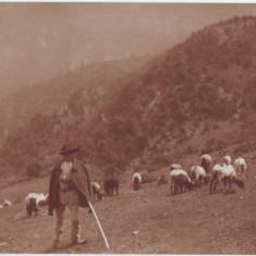 1643 - Cioban si oile sale - unused