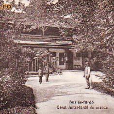 Ok-0947- Ro, Baile Buzias, c.p.cenz. circ.1915: Baia Sf. Anton, bazin inot, anim