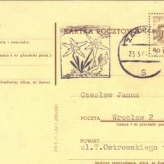 Intreg postal Polonia, 1962, stampila Floare de colt - 1964