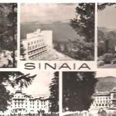 Carte postala- SINAIA - Colaj