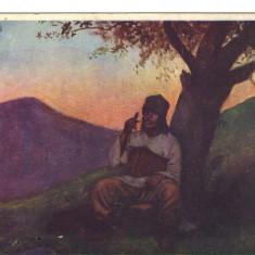 Ilustrata folclor Bucovina - cioban