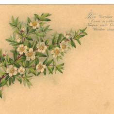 Carte postala Ilustrata flora - flori de maslin