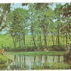 Carte postala-ORADEA-Rezervatia naturala - Carte Postala Crisana dupa 1918