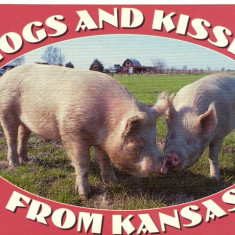 Carte postala ilustrata FAUNA -  Animale domestice - porci din Arkansas