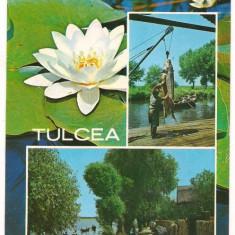 Carte postala-TULCEA - Carte Postala Dobrogea dupa 1918